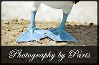 Visit Photography by Paris